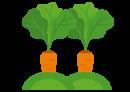 Siembra y cultivo