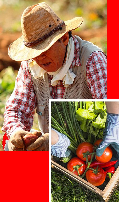 Veneinnova - Cultivo y distribución de productos ecológicos