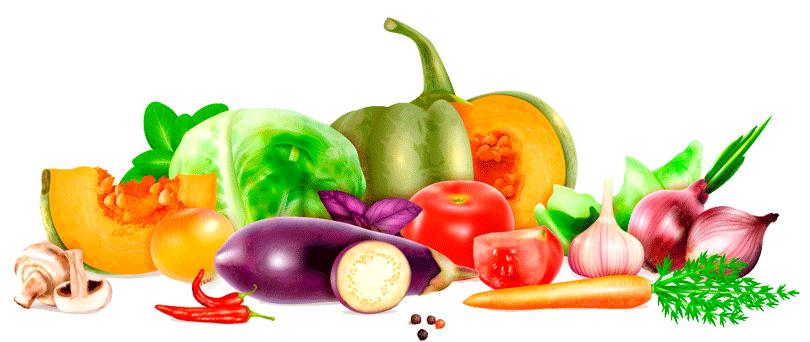 Veneinnova - Cultivo y distribución de productos agrícolas
